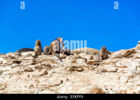 Group of sea lions near Damas Island in Chile - Stock Photo