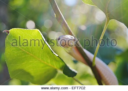 Close-up view of snake on branch - Stock Photo