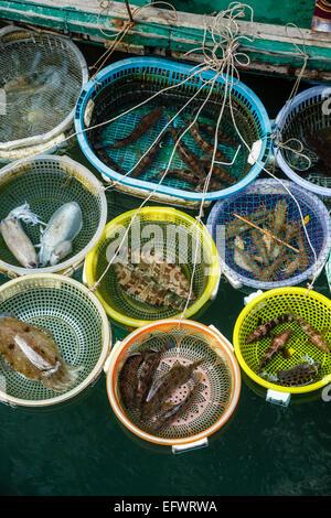 Fish catch, Halong Bay, Vietnam - Stock Photo