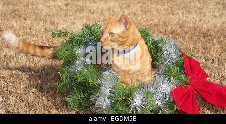 Red tabby kitty cat in a Christmas wreath with a red bow and silver tinsel - Stock Photo