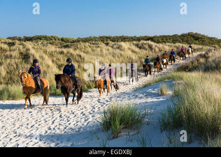 Horse riding in the dunes of Spiekeroog Island, Nationalpark, North Sea, East Frisian Islands, East Frisia, Lower - Stock Photo