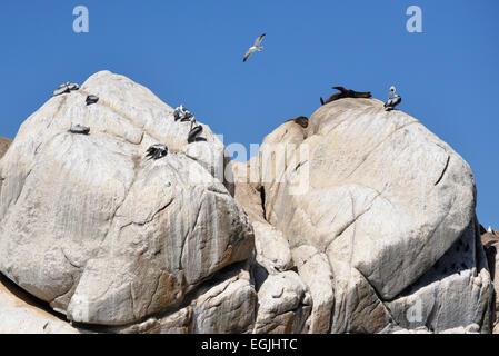 sea lion rock chile - Stock Photo
