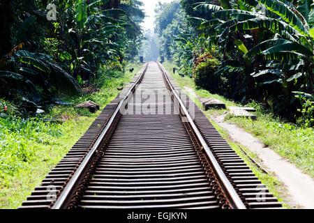 Railway tracks in jungle - Stock Photo