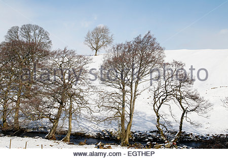 Holwick, Middleton-in-Teesdale, Co Durham, UK. 2nd March, 2015. UK Weather: Overnight snow returns to Upper Teesdale - Stock Photo