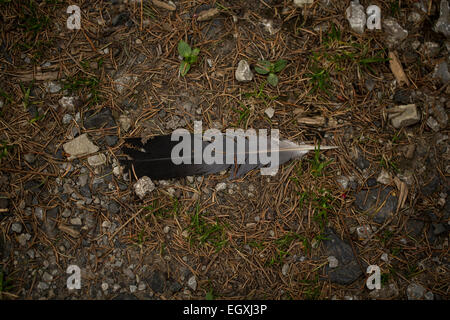 Feather on the forest floor. Rhoen Mountains, Germany - Stock Photo