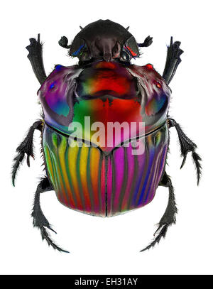 fantasy colors on Oxysternon conspicillatum dung beetle - Stock Photo