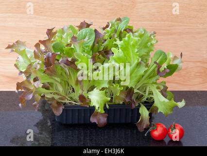 Baby salad leaves growing in a box, for a 'cut and come again' supply. - Stock Photo