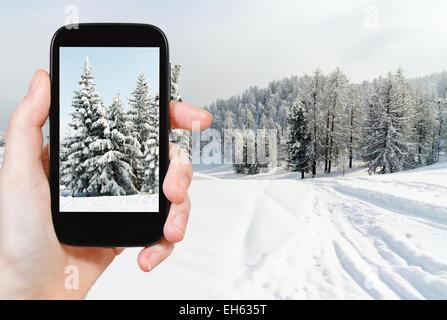 travel concept - tourist taking photo of snowbound fir trees near ski run in skiing area Via Lattea (Milky Way), - Stock Photo