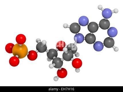 Adenosine monophosphate molecule - Stock Photo