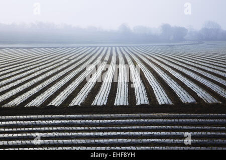 vegetable fields covered in plastic, Bretagne - Stock Photo