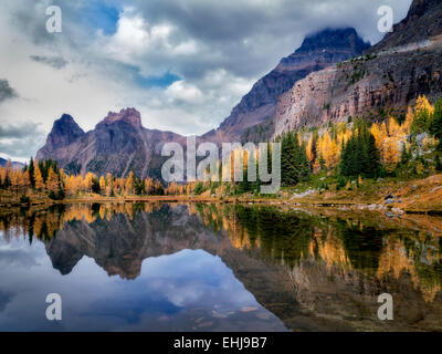 Lake reflection larch in fall color and mountains. Yoho National Park, Opabin Plateau, British Columbia, Canada - Stock Photo