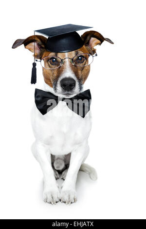 graduated dog - Stock Photo