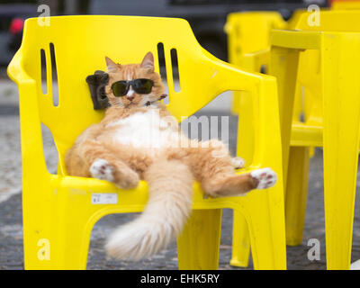 Beijing, Brazil. 14th Mar, 2015. A cat with sunglasses enjoys the sunshine in a chair near the Sao Conrado beach - Stock Photo