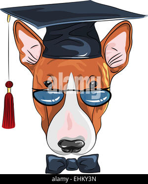 vector funny graduated dog Bullterrier - Stock Photo