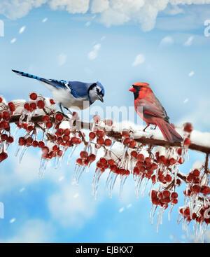 Birds  In Winter - Stock Photo