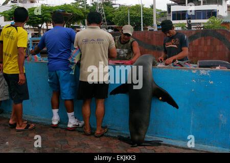Fish market in Puerto Ayora, Santa Cruz Island, Galapagos Islands, Ecuador, South America - Stock Photo