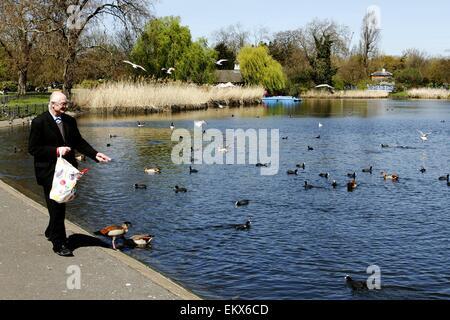 Regents Park, London, UK. 14th April, 2015. UK weather: A man feeds the birds in Regents Park, London in the spring - Stock Photo