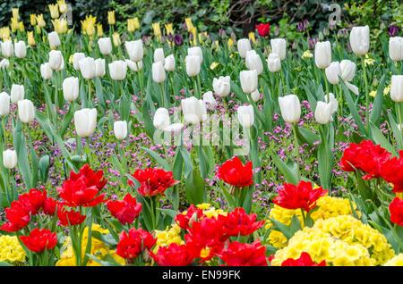 Flowers in St James's Park, London, UK - Stock Photo