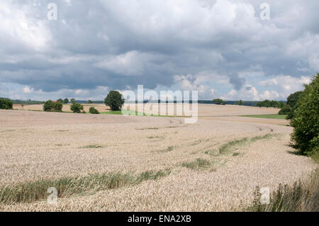 Landscape with grain field in the southern Odenwald Mosbach, Baden-Wurttemberg, Germany - Stock Photo