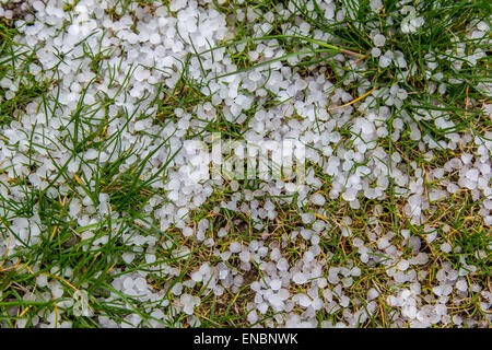 The pieces of hail on the grass - Stock Photo
