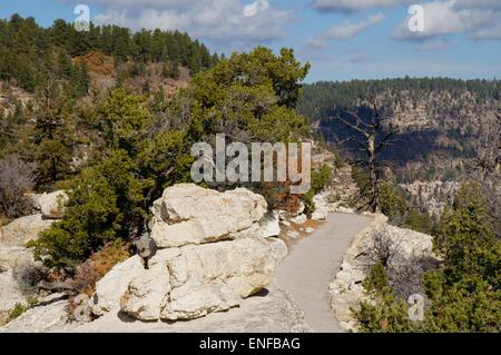 Mountain trail at the Grand Canyon. - Stock Photo