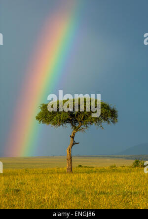 Rainbow After Rainstorm, Rift Valley Province, Maasai Mara, Kenya - Stock Photo