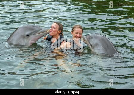 Swimming with dolphins at Dolphins Plus Bayside, a dolphin research & interaction center in Key Largo, FL. USA - Stock Photo