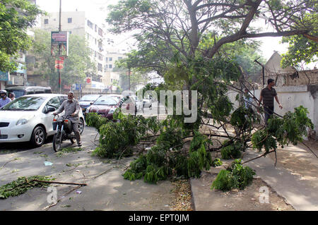 Vehicles pass near fallen tree that lay down at road create hurdle in normal flow of traffic that may cause of any - Stock Photo