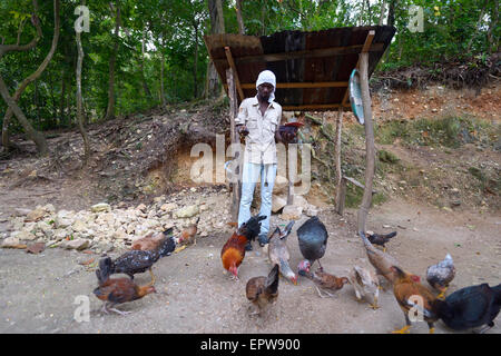 Man feeding his chickens, Riviere Froide, Ouest Department, Haiti - Stock Photo