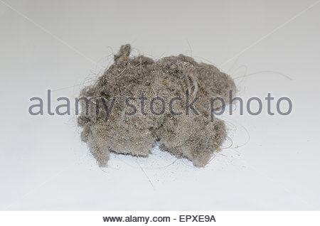 Dust ball over a white background. House dust can produce allergies - Stock Photo