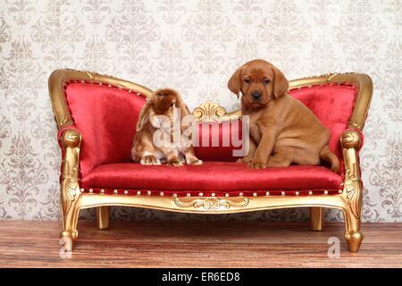 dog and bunny - Stock Photo