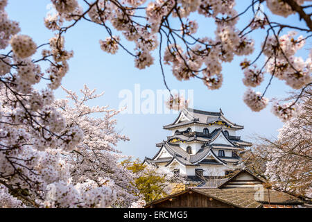 Hikone, Japan at the Castle in Spring. - Stock Photo