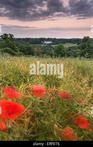 Poppy field at South Downs National Park, Hampshire, England, South UK - Stock Photo