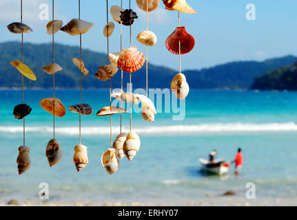 Sea shells on the sea shore. - Stock Photo