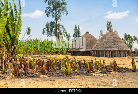 Traditional village houses near Addis Ababa, Ethiopia surrounded by crops - Stock Photo