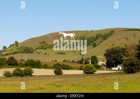 Westbury White Horse chalk figure on the escarpment of Salisbury Plain in Wiltshire. - Stock Photo