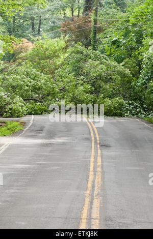 Fallen tree in roadway - USA - Stock Photo
