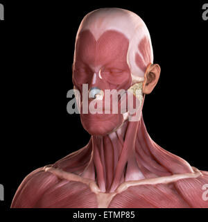 Conceptual image of the muscles of the face. - Stock Photo