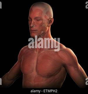 Conceptual image of the face and upper body with the musculature visible under the skin. - Stock Photo