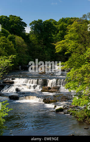 Aysgarth Falls in the Yorkshire Dales National Park on the River Ure in Wensleydale, UK. - Stock Photo