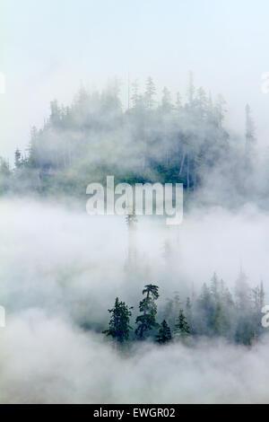 Thick fog along the coast of the Great Bear rainforest along the British Columbia coastline, Canada. - Stock Photo