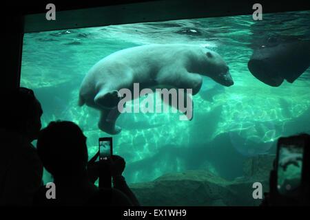Visitors look as a polar bear (Ursus maritimus) swimming underwater at Schönbrunn Zoo in Vienna, Austria. - Stock Photo