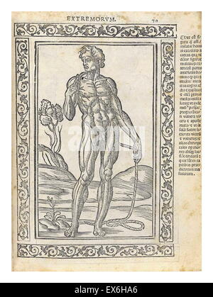Anatomical illustration from 'Isagogae breues, perlucidae ac uberrimae, in anatomiam humani corporis a communi medicorum - Stock Photo