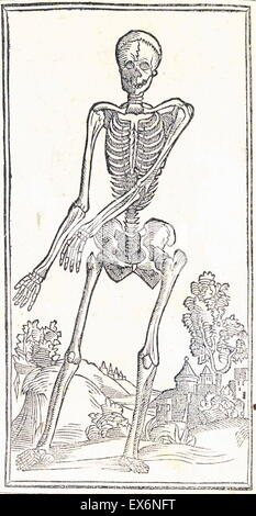 anatomical illustration by Jacopo Berengario da Carpi (ca.1460-ca.1530) 'Isagogae breves per lucidae ac uberrimae - Stock Photo