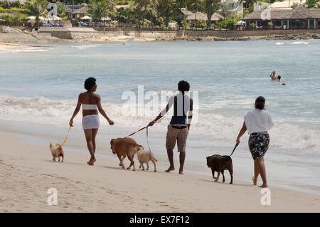 Two women and a man walking a dog on the beach, Mahe island, Indian Ocean, Seychelles - Stock Photo