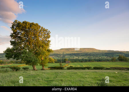 Evening sunlight on Pen Hill in Wensleydale in the Yorkshire Dales - Stock Photo