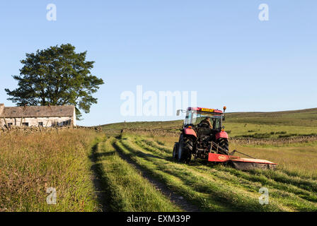 Bowlees, Upper Teesdale, County Durham. Wednesday 15th July 2015, UK Weather.   On upland farms with traditional - Stock Photo
