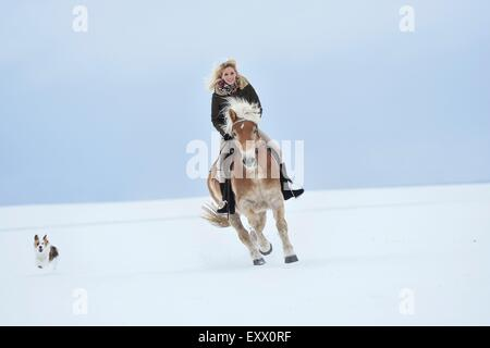 Young woman riding Haflinger horse in snow - Stock Photo