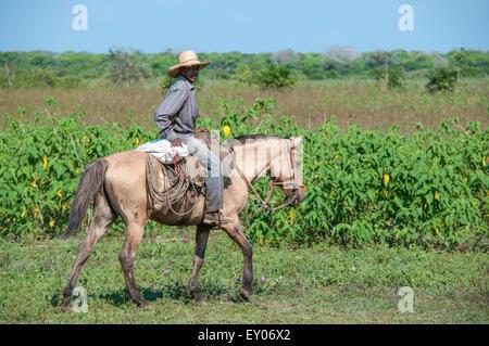 Brazilian Cowboy riding a Pantaneiro horse on a cattle ranch in the Pantanal, Mato Grosso, Brazil, South America - Stock Photo