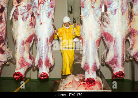 Butcher And Cow Carcasses On The Production Line Interior Of Slaughterhouse - Stock Photo